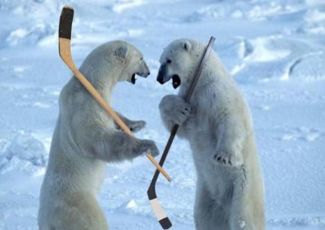 polar-bears-hockey.jpg